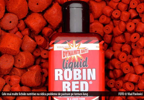 robin-red