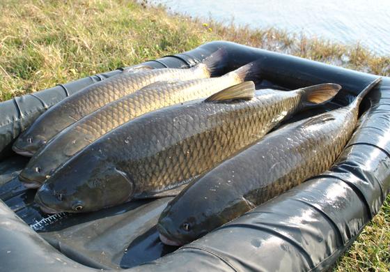 pescuit-la-amur