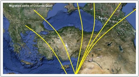 Turkey_CoturnixQuail_migration_routes