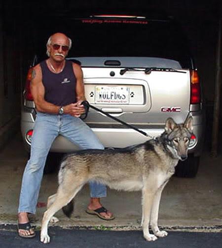 2 tanja_askani_wolf_dog_friends2-1