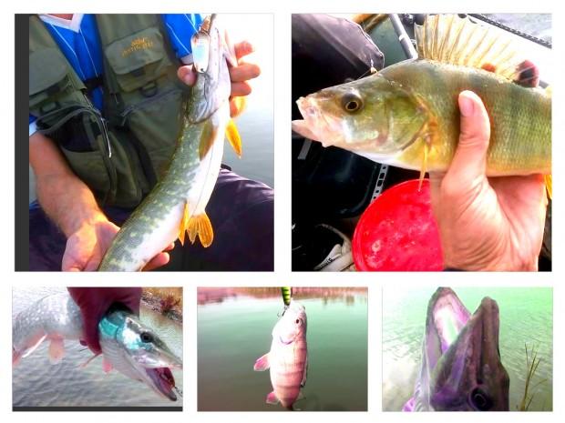 2. Rezultate pescuit
