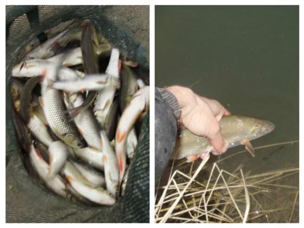 1-evolutie pescar