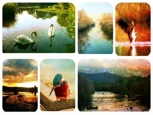 2- natura vie