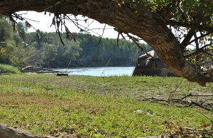 Pescuit la crap pe salbatica Dunare