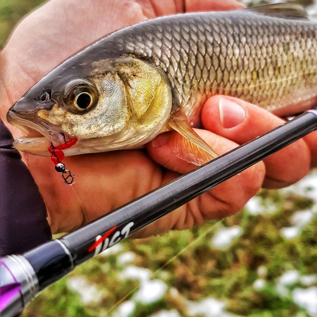 Pescuitul cleanului cu naluci soft