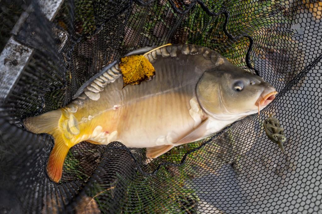 Celý deň som lovil nádherné ryby hrajúce jesennými farbami.
